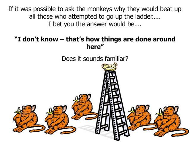5 Monkey_09